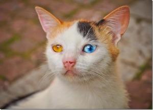 Un chat avec des yeux merveilleux. Bulgarie, été 2009 par Bobby Pfeiffer.